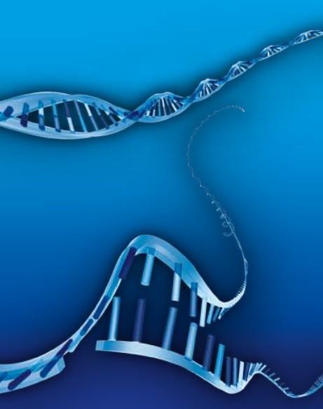 Solarien DNA Schaeden