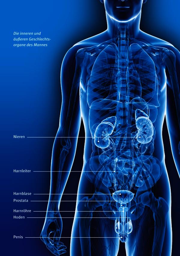 Bei der frau prostata Untersuchung der